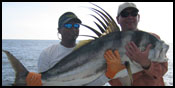 Roosterfish in Costa Rica